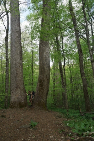 This is the Joyce Kilmer Slickrock Wilderness in North Carolina. It's one of the last virgin forests in the U.S.