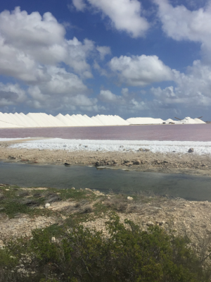 "Salt is a significant export for Bonaire. Basins were established on the south coast and filled with salt water. Once the water evaporates and salt remains. The salt is then stored in ""pans."""
