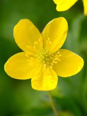 The number of petals in a flower consistently follows the Fibonacci sequence. Famous examples include the lily, which as three petals and the buttercups which have five. Each petal is placed at .618034 per turn allowing for the best possible exposure to sunlight.