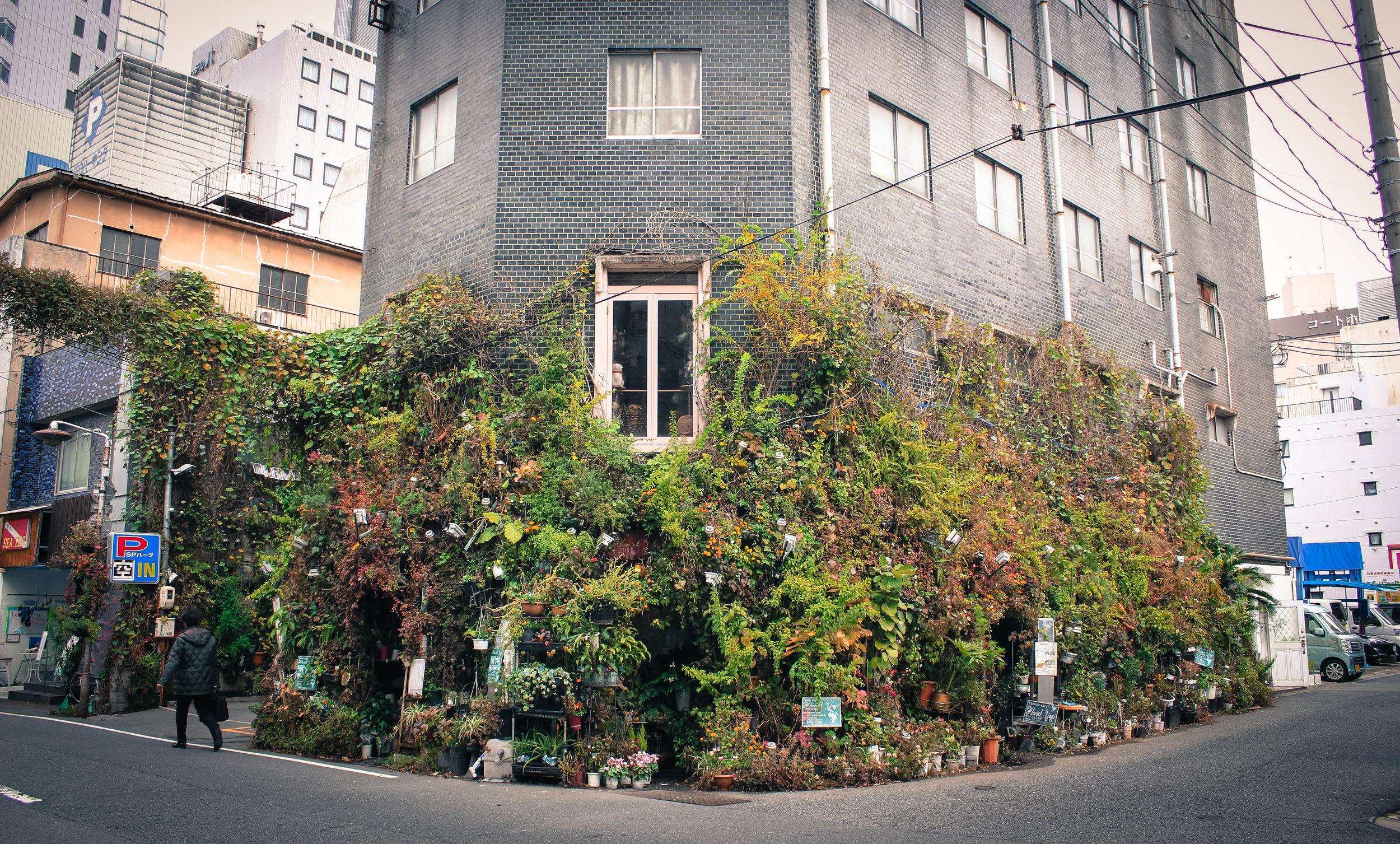 Beautiful house goals.