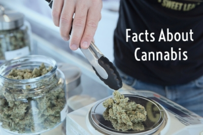 medical-marijuana-get-budding-72798.jpg