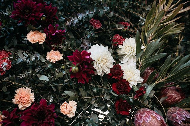 Close up of the ceremony backdrop @footscrayarts.⠀⠀⠀⠀⠀⠀⠀⠀⠀ Swoony cream and burgundy dahlias, peachy carnations and pink proteas. ⠀⠀⠀⠀⠀⠀⠀⠀⠀ .⠀⠀⠀⠀⠀⠀⠀⠀⠀ .⠀⠀⠀⠀⠀⠀⠀⠀⠀ .⠀⠀⠀⠀⠀⠀⠀⠀⠀ ⠀⠀⠀⠀⠀⠀⠀⠀⠀ Photo by Jess Mitchell @fernandstonephotography_  @footscrayarts ⠀⠀⠀⠀⠀⠀⠀⠀⠀ #nofloralfoam #ceremonybackdrop #melbourneflorist #footscraywedding #studiogreen #proteas #pampasgrass #carnations #gum #ecalyptus #dahlias #swoony #romantic #footscrayarts #amphitheatre #hangingflowers #flowerart