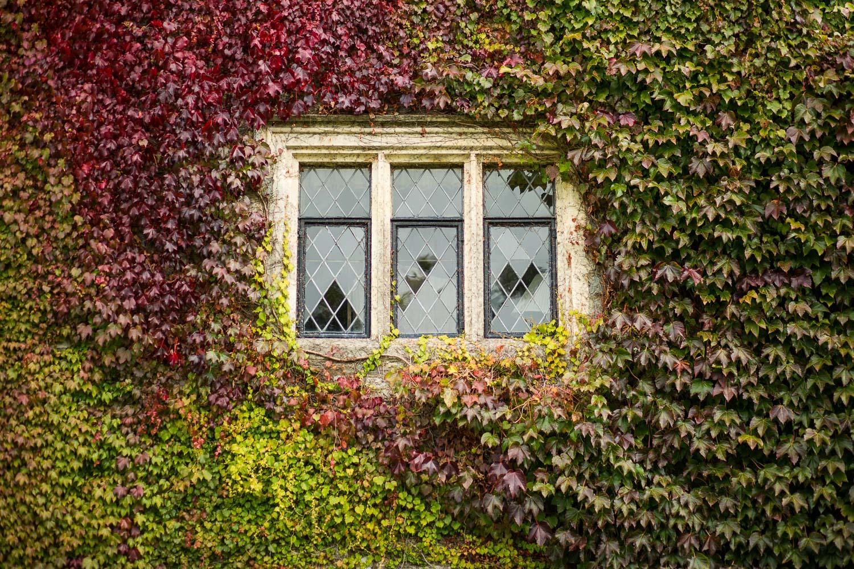 champneys_eastwell_manor-window-ashford.jpg