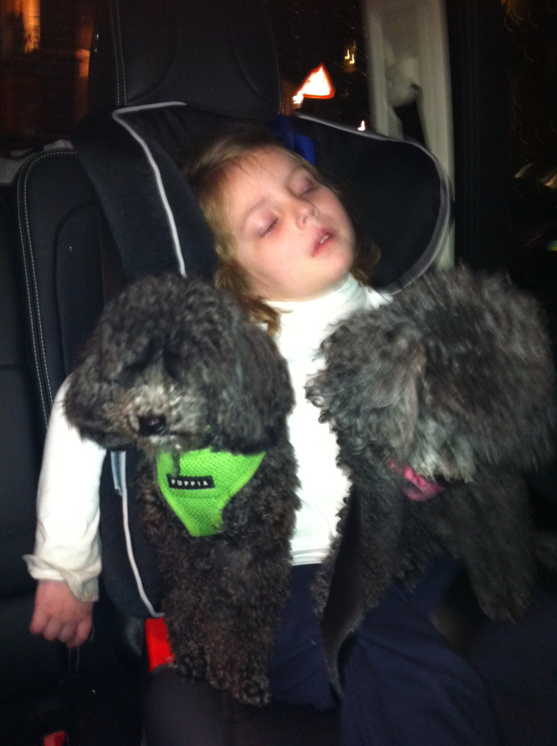 Neve asleep with Bella and Baci