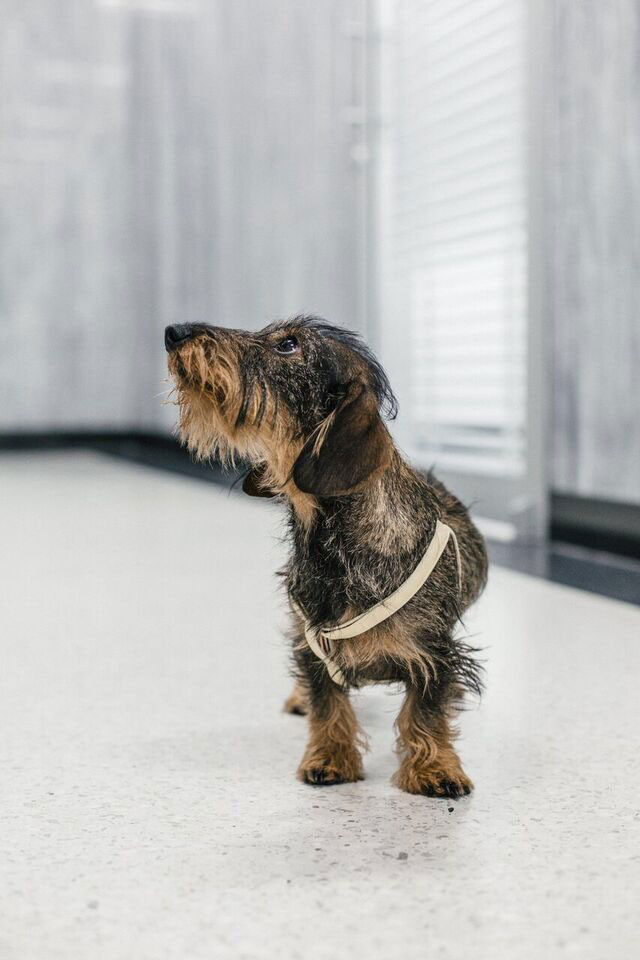 Thom Browne's Year of the Dog Collection.jpg