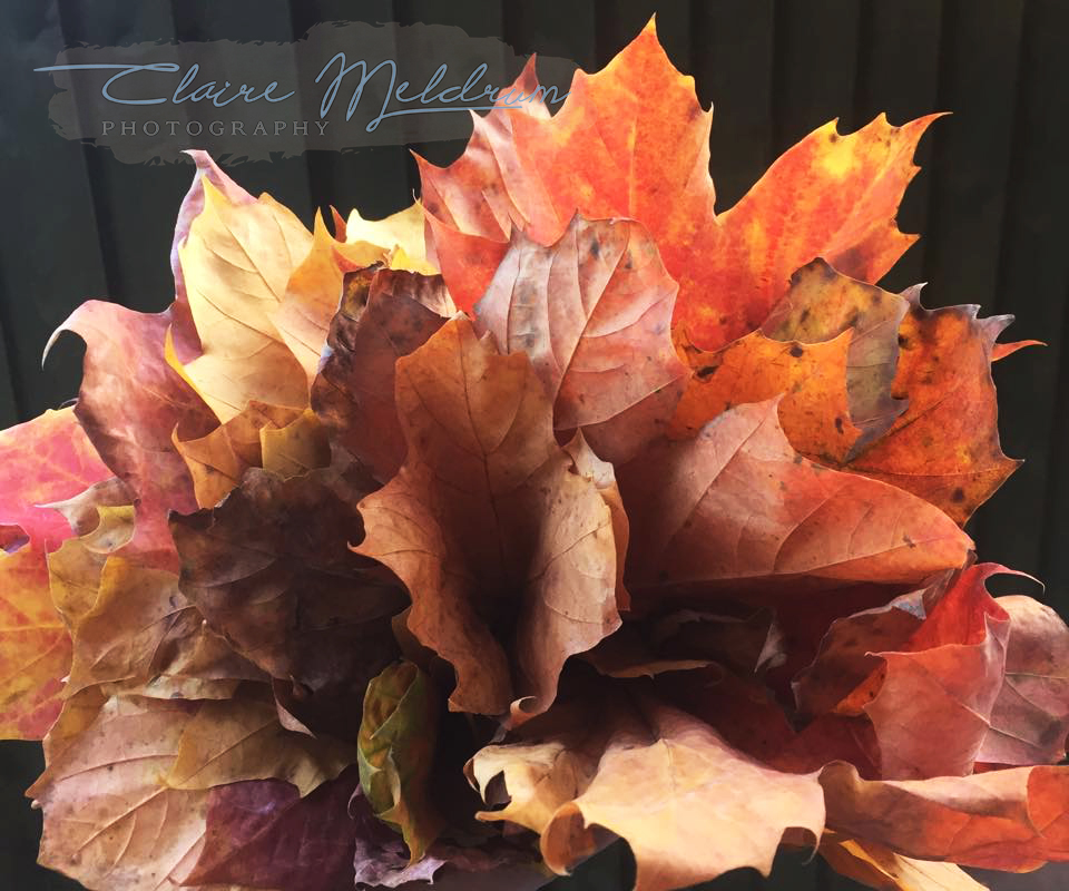 Autumn - my daughter made me a leaf bouquet. 40 + likes on Facebook and comment, image taken using our family ipad.