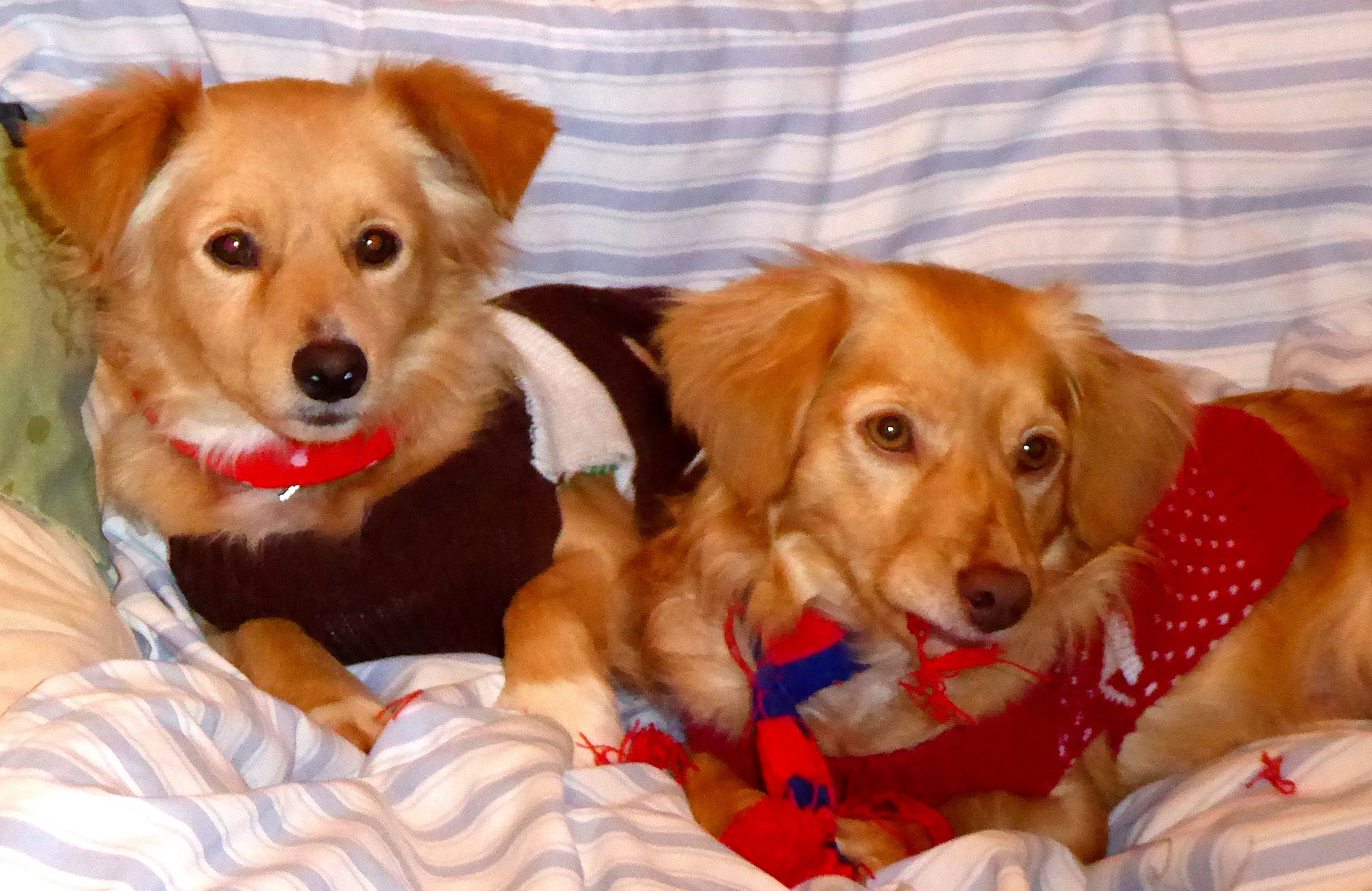 Ollie and Stanley. Photo courtesy Steve Sims.