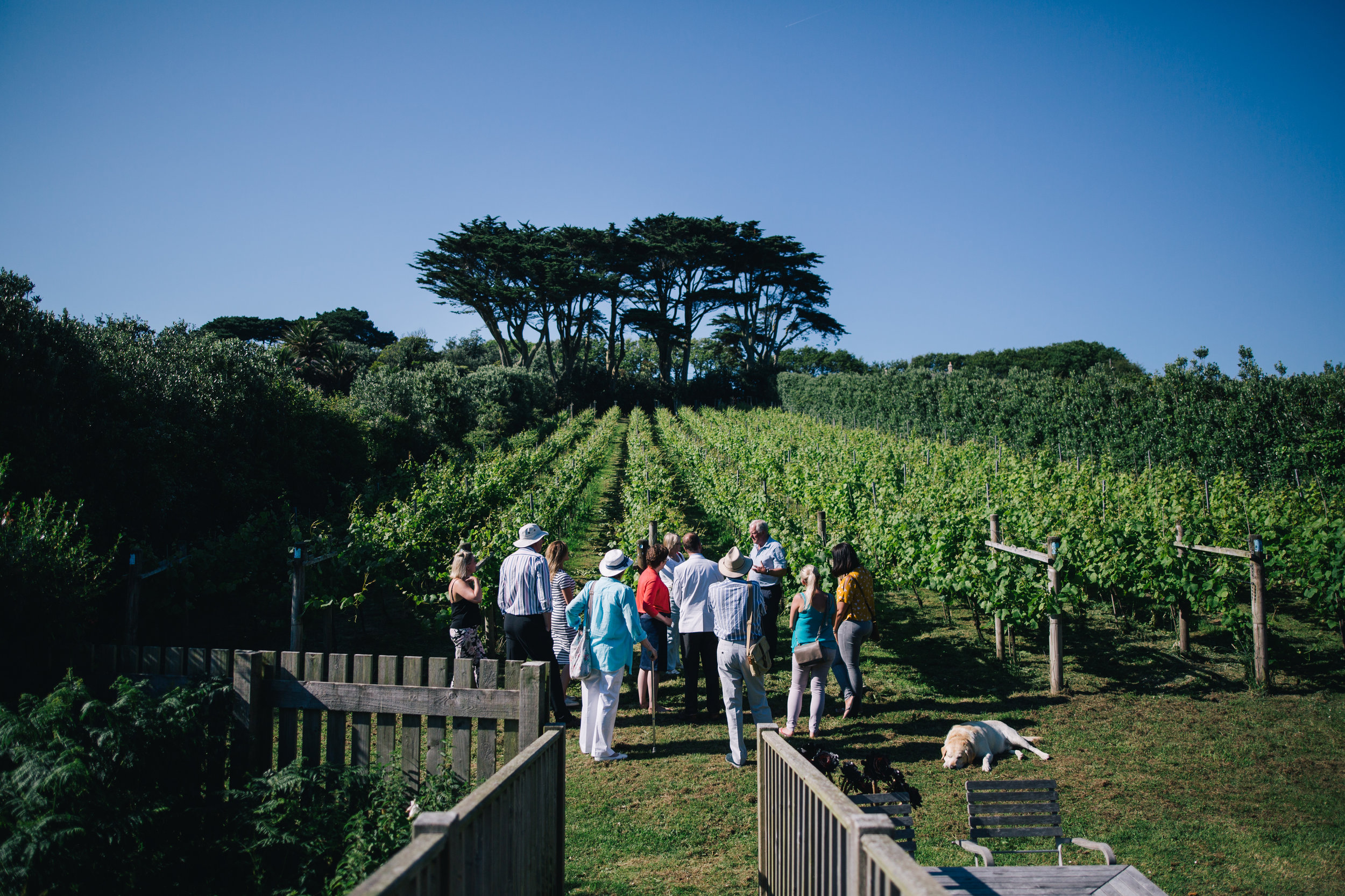 Holy Vale Vineyard on St Mary's. Image courtesy of Visit Isles of Scilly.