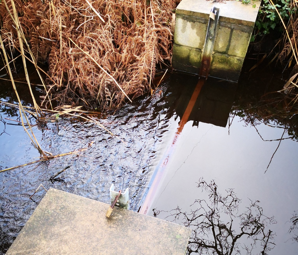 Sluice boards are put in place to help monitor the wetlands and to stop saltwater seeping in during high tides. Image courtesy of the Isles of Scilly Wildlife Trust.