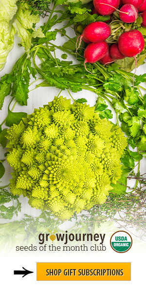 Enjoy organic food with a Growjourney subscription