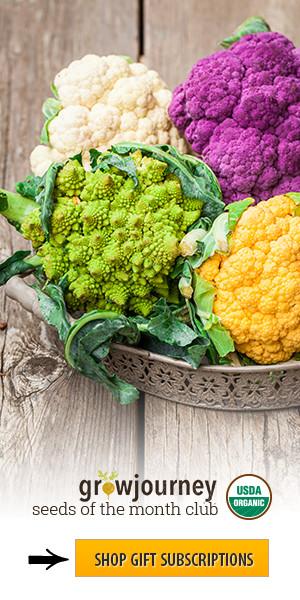 Enjoy organic food with a Growjouney subscription