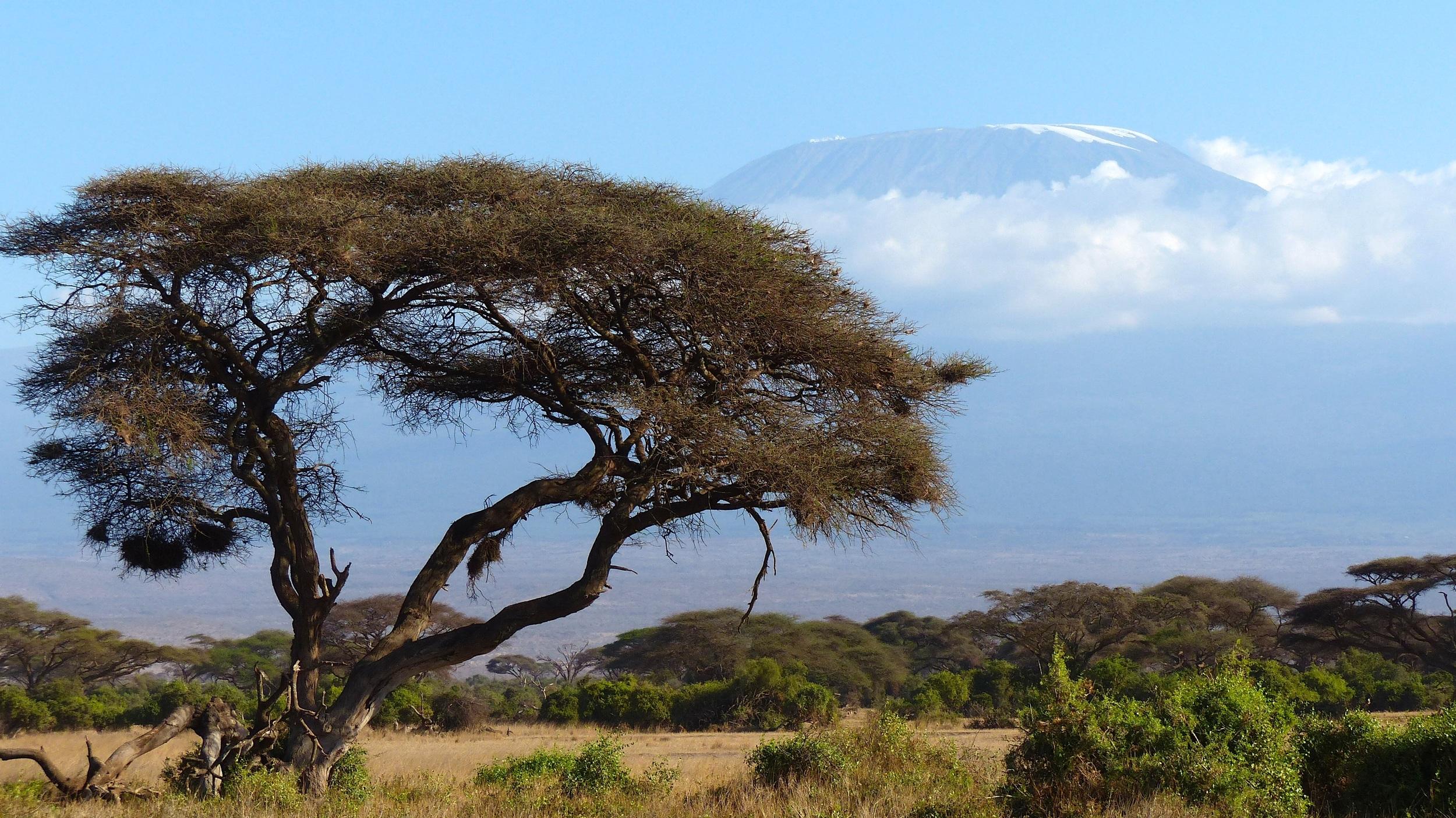 Kilimanjaro, Africa – 19,340' (5896m)