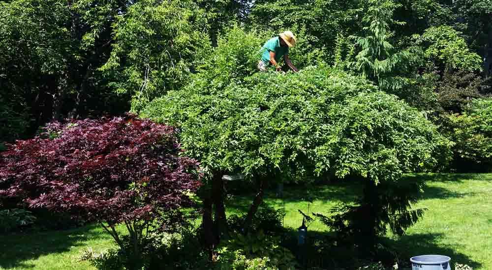 During Pruning