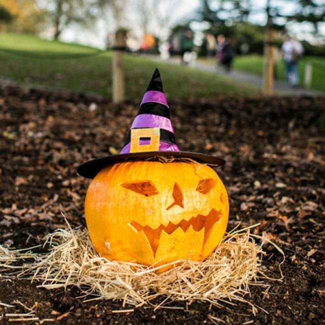 Pumpkin at Horniman Halloween Fair