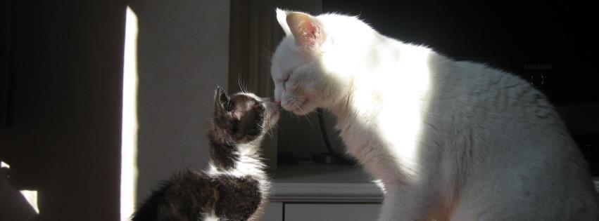 catford+animal+clinic1.jpg