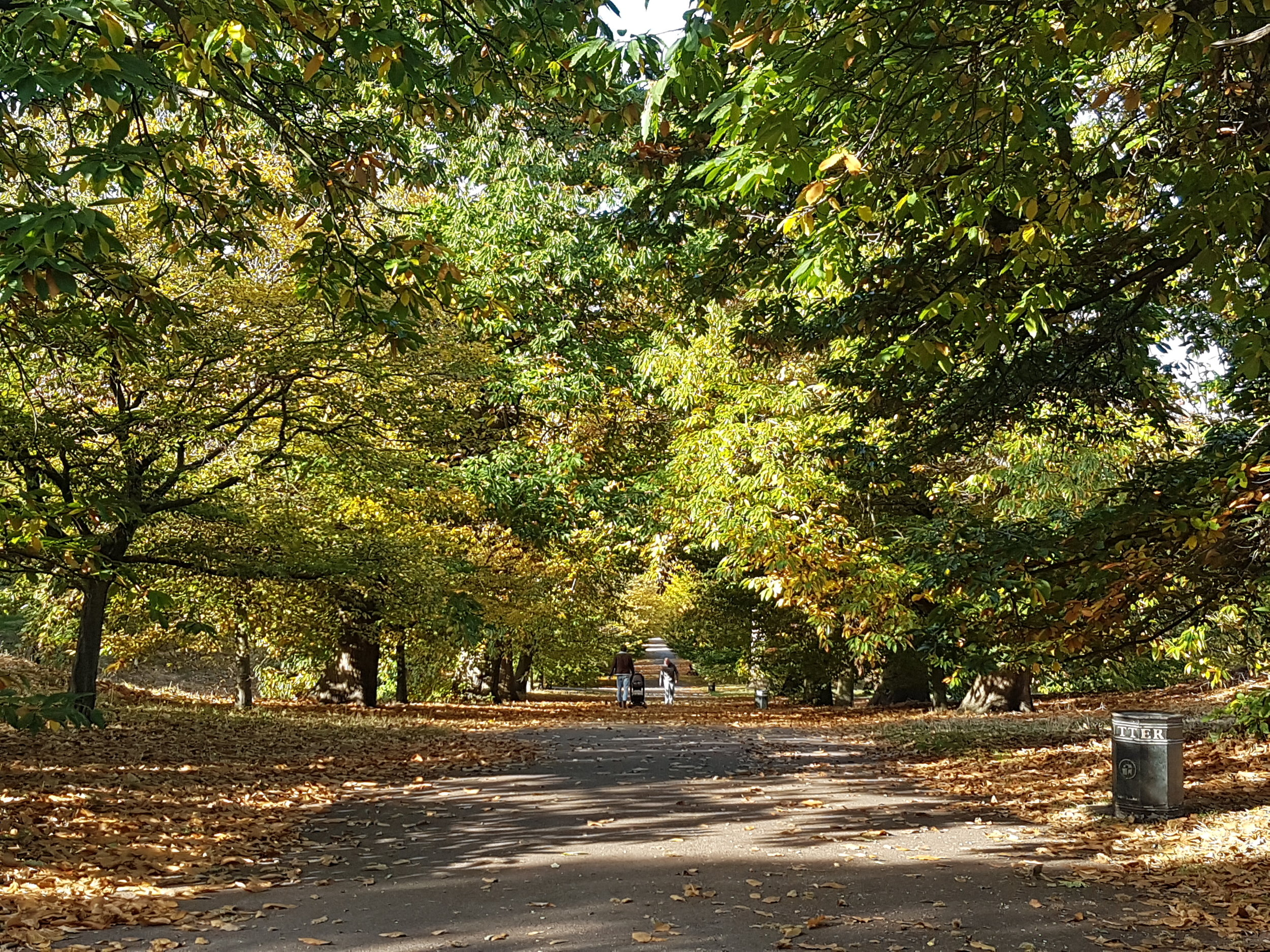 autumn greenwich park.southlondonclub.jpg