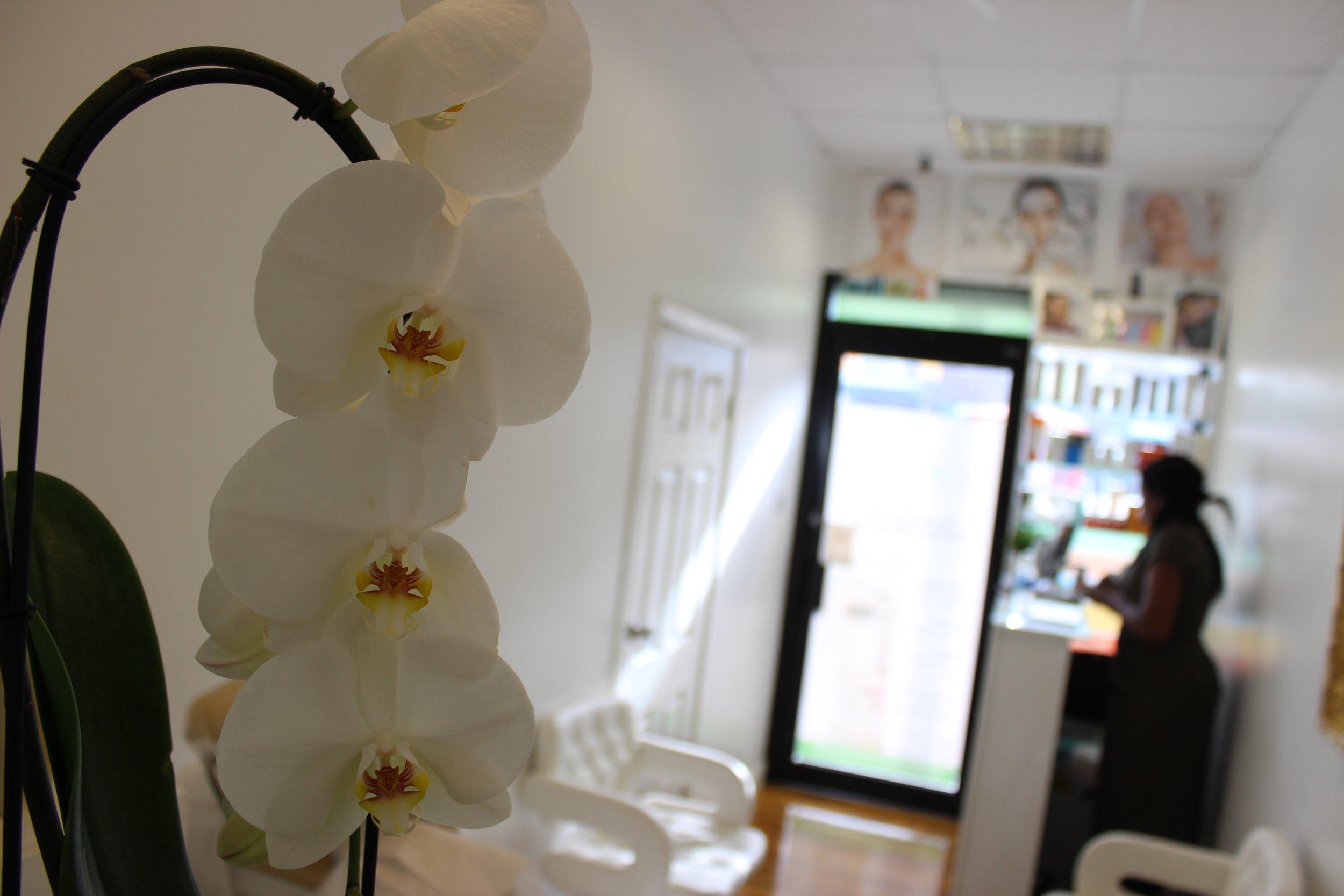 Adexcel Aesthetics Beauty Clinic in Bermondsey South East London Club Card 8.jpg
