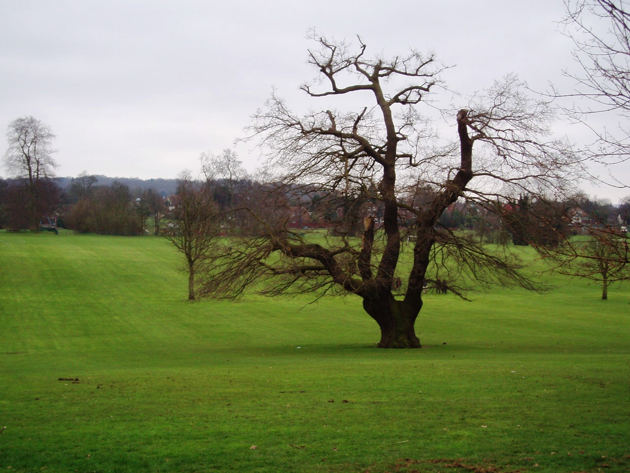 lloyd park south london club