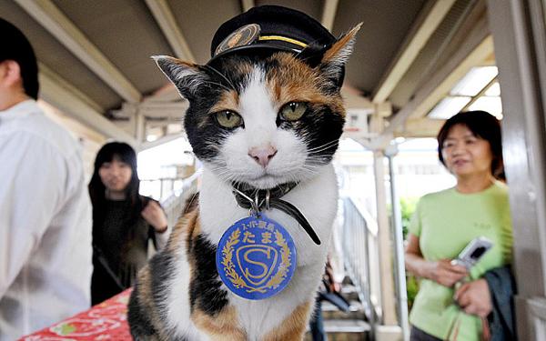 japan-station-cat_3357178b.jpg