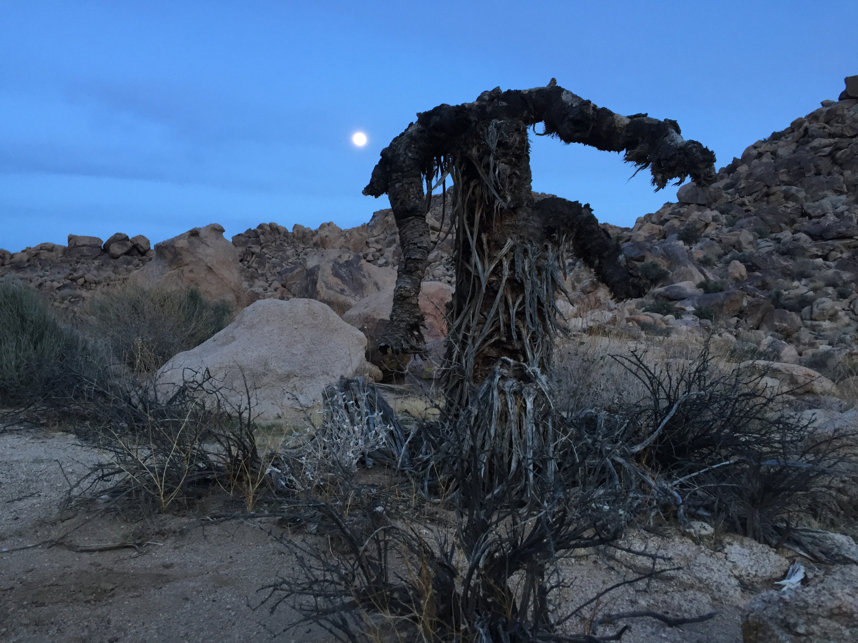 yucca man - photo by Ken Layne.jpg