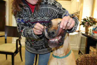 Doggy-dentist-plymouth-MN.jpg
