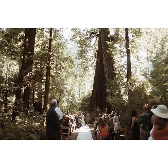 Making promises under the redwoods