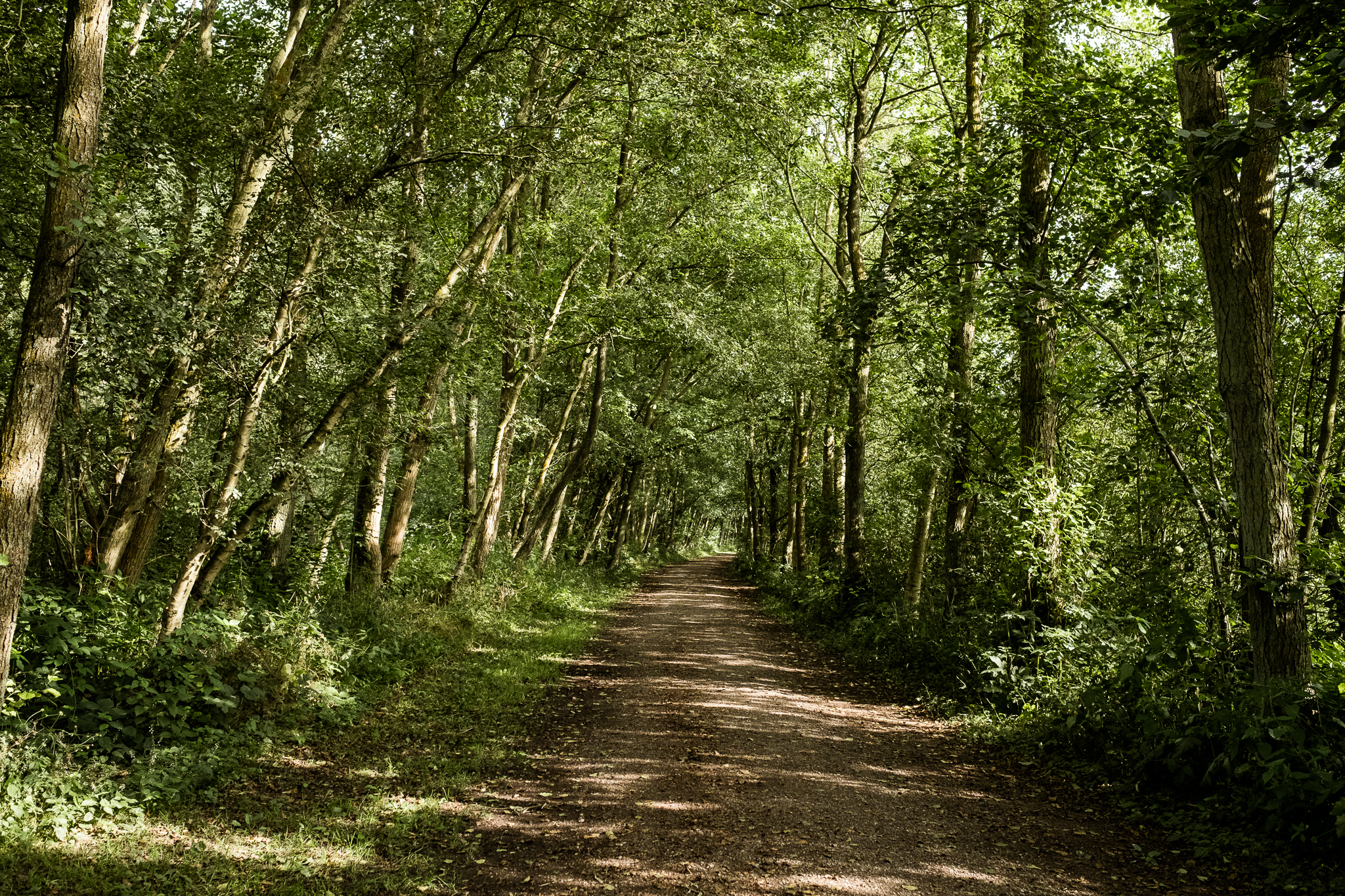 07.31.2016 Dimmingsdale Walk Photowalk Staffordshire Ramblers Retreat Trees-55.jpg