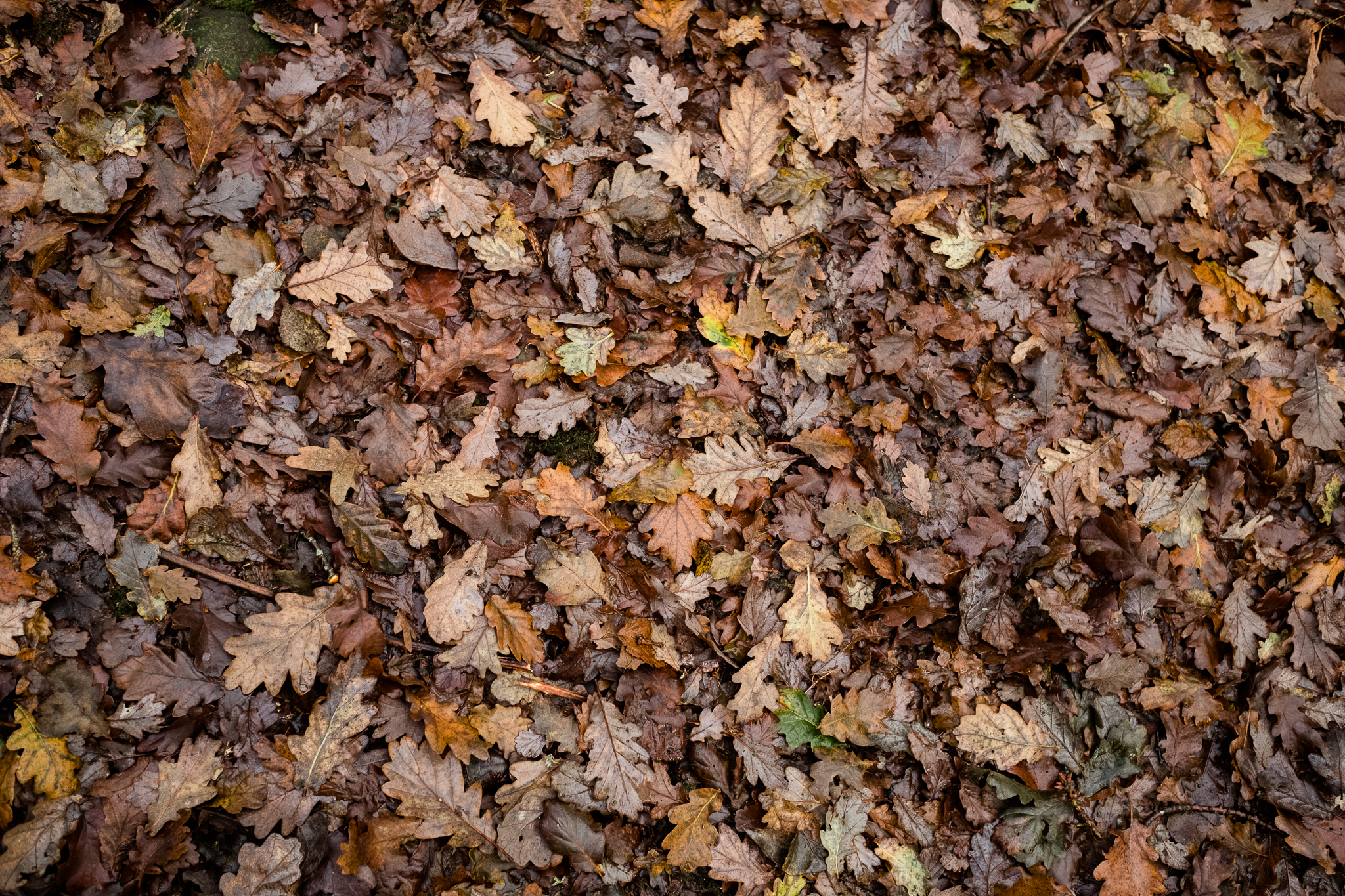 Photowalk around Stockton Brook and Endon Autumn Tinster's Wood Canal Endon Well Leaves - Jenny Harper-3.jpg