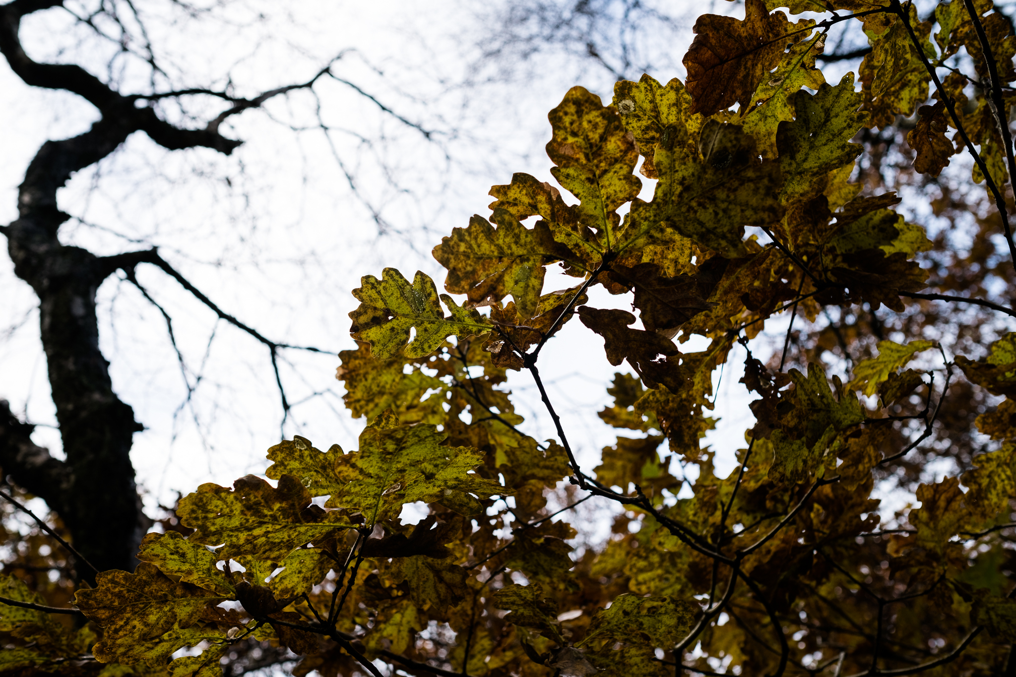 Photowalk around Stockton Brook and Endon Autumn Tinster's Wood Canal Endon Well Leaves - Jenny Harper-5.jpg