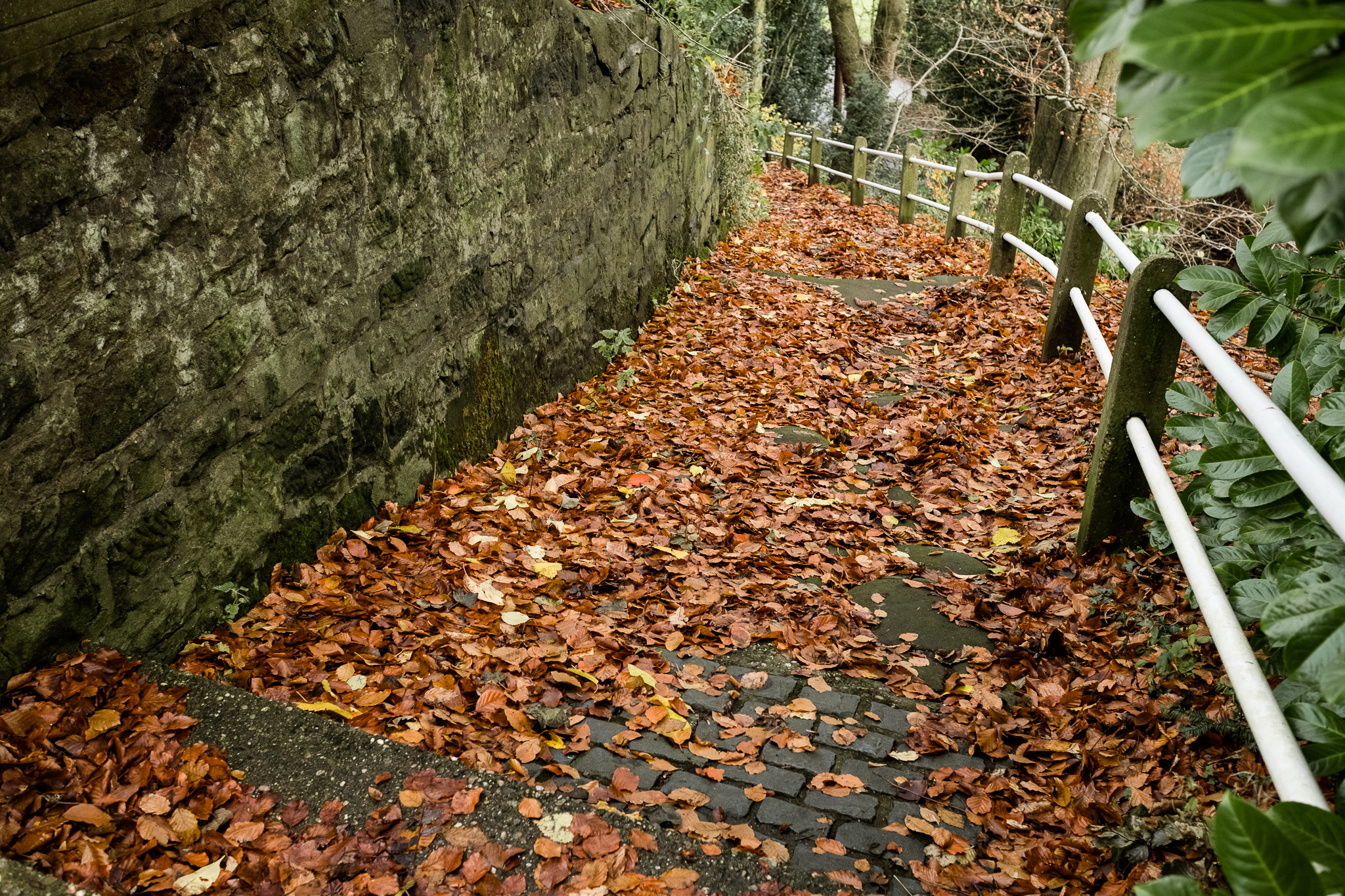 Photowalk around Stockton Brook and Endon Autumn Tinster's Wood Canal Endon Well Leaves - Jenny Harper-31.jpg