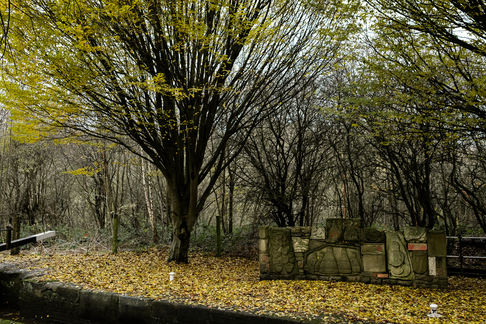 Photowalk around Stockton Brook and Endon Autumn Tinster's Wood Canal Endon Well Leaves - Jenny Harper-56.jpg
