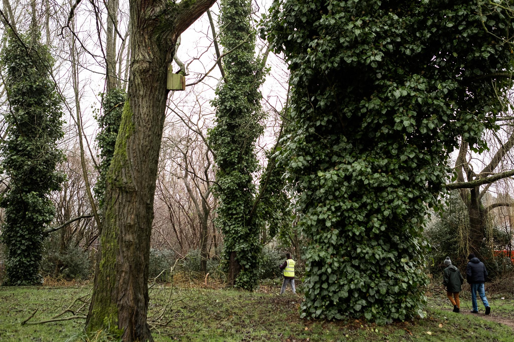Closer to Home Walk Photowalk Joiner's Square, Hanley, Stoke-on-Trent, Staffordshire Winter Nature Reserve-3.jpg