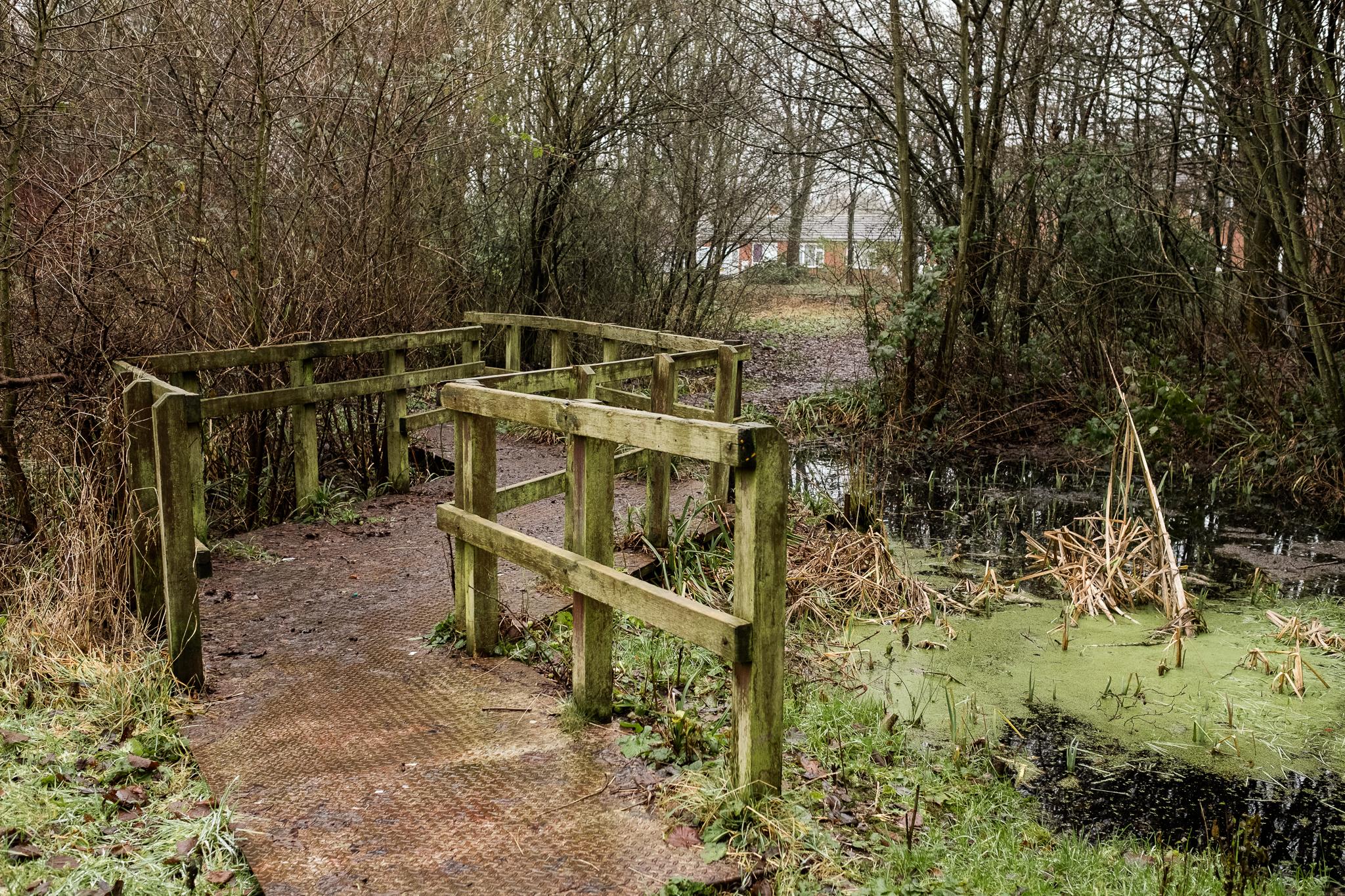 Closer to Home Walk Photowalk Joiner's Square, Hanley, Stoke-on-Trent, Staffordshire Winter Nature Reserve-7.jpg