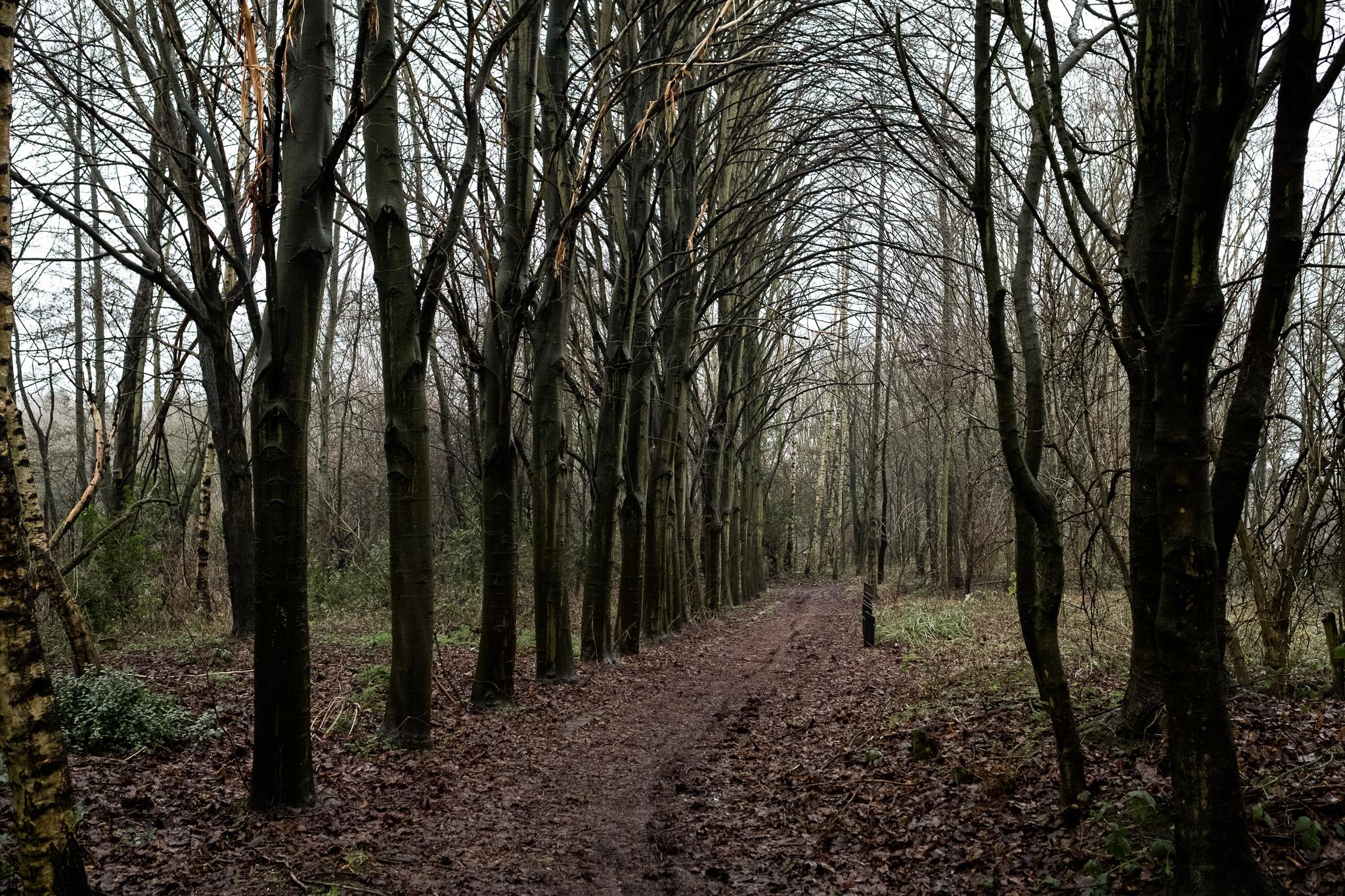 Closer to Home Walk Photowalk Joiner's Square, Hanley, Stoke-on-Trent, Staffordshire Winter Nature Reserve-22.jpg