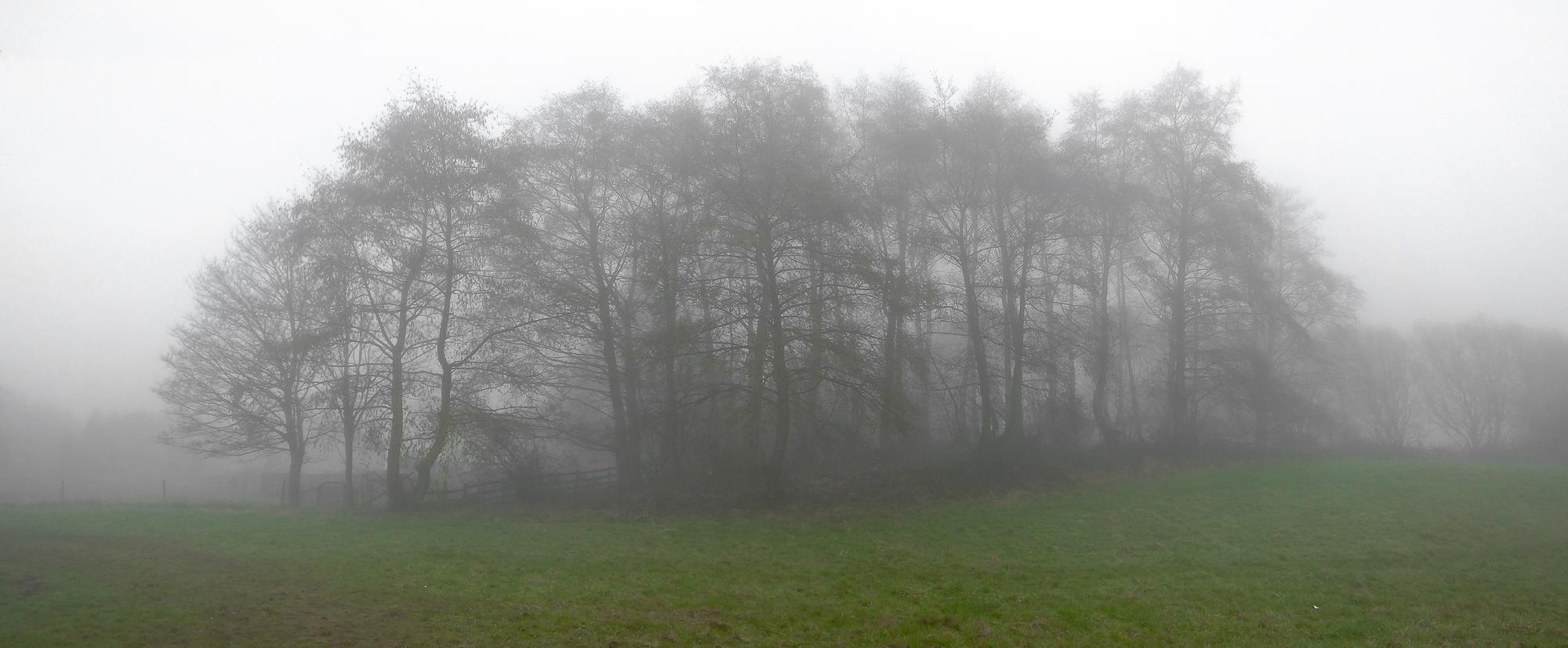 misty1103161.jpg