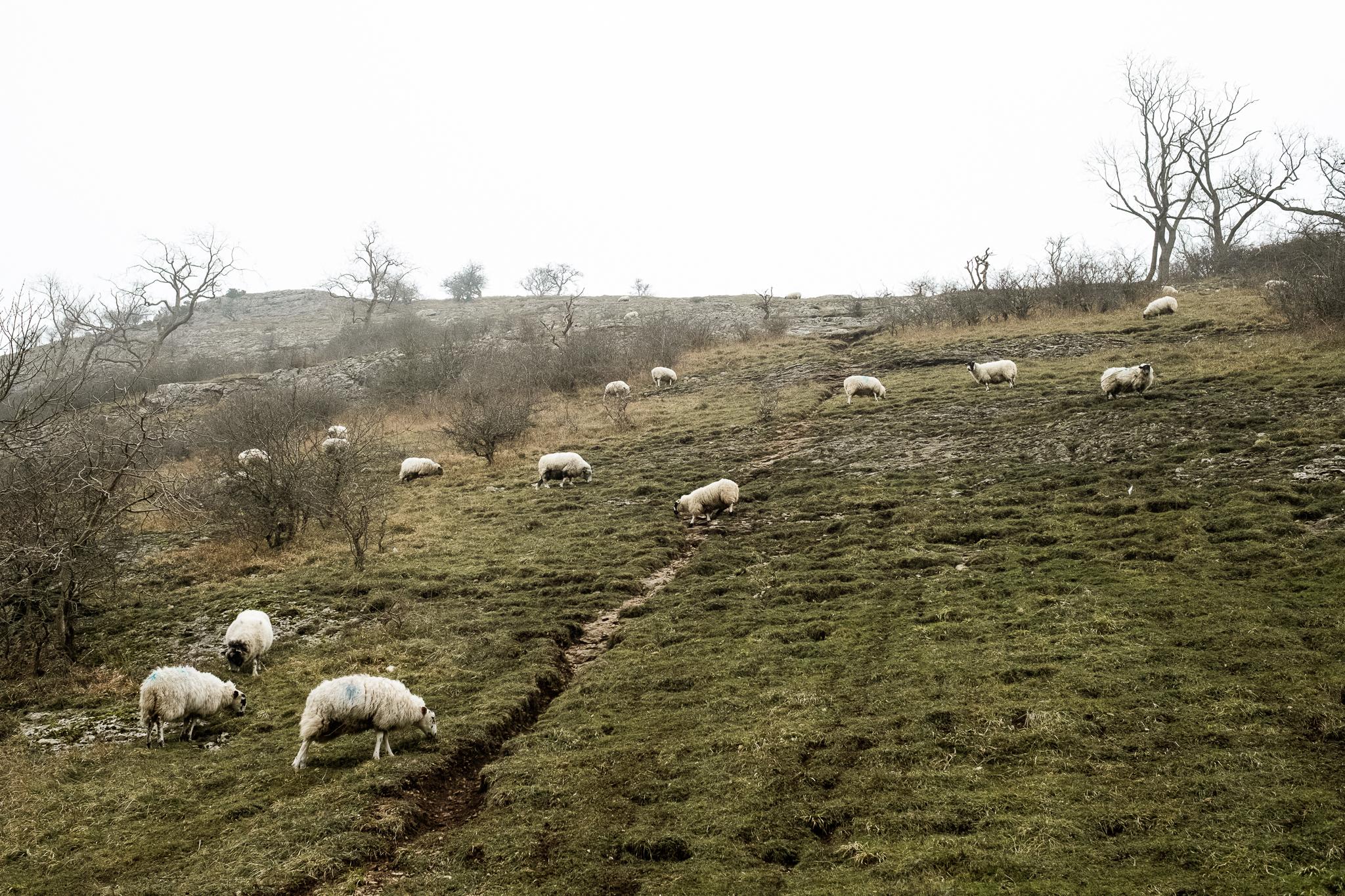 Get Some Fresh Air Photowalk Dovedale Fog Mist Cold Winter River Dove Ilam Sheep Landscape-11.jpg