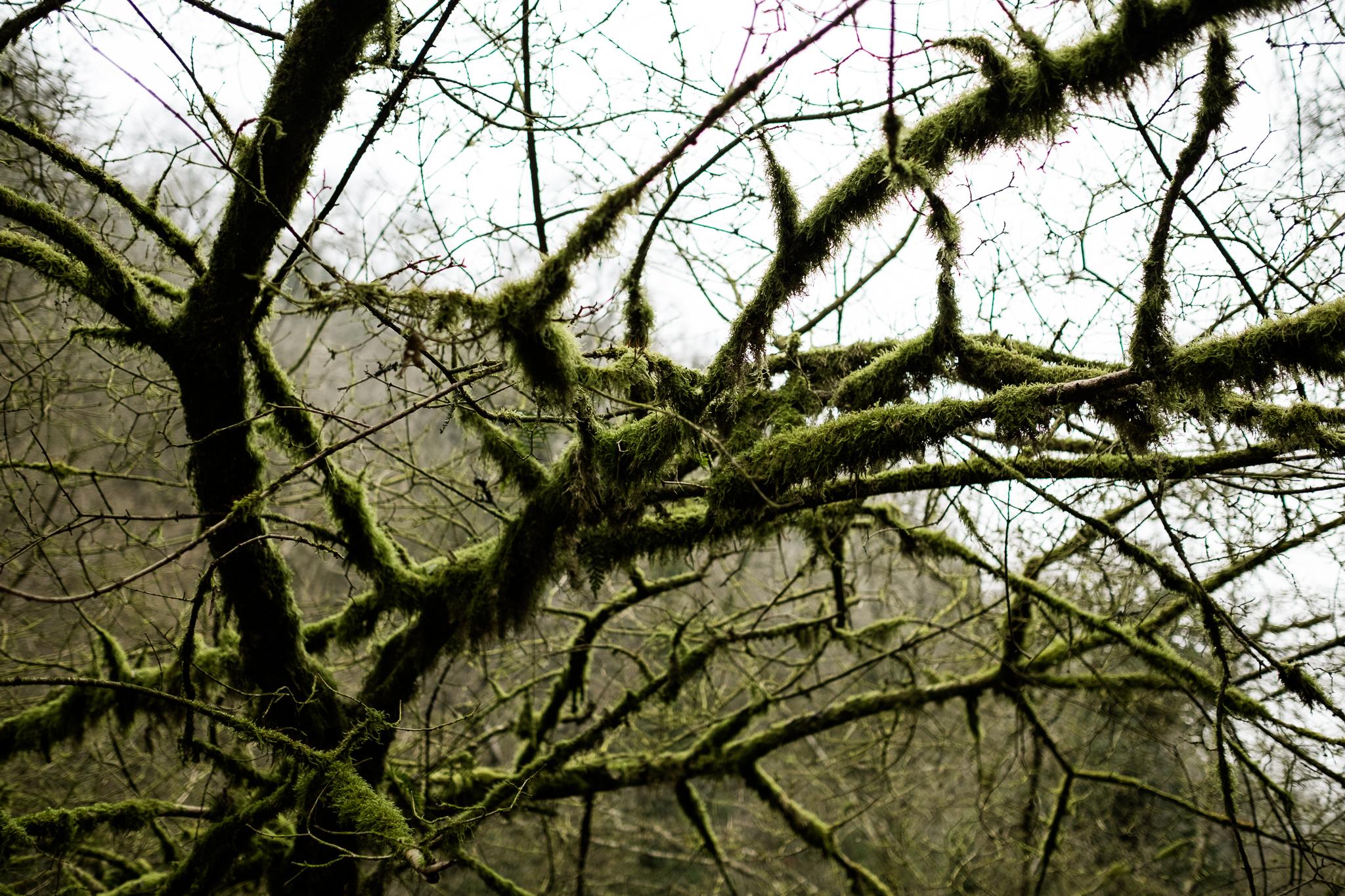 Get Some Fresh Air Photowalk Dovedale Fog Mist Cold Winter River Dove Ilam Sheep Landscape-21.jpg