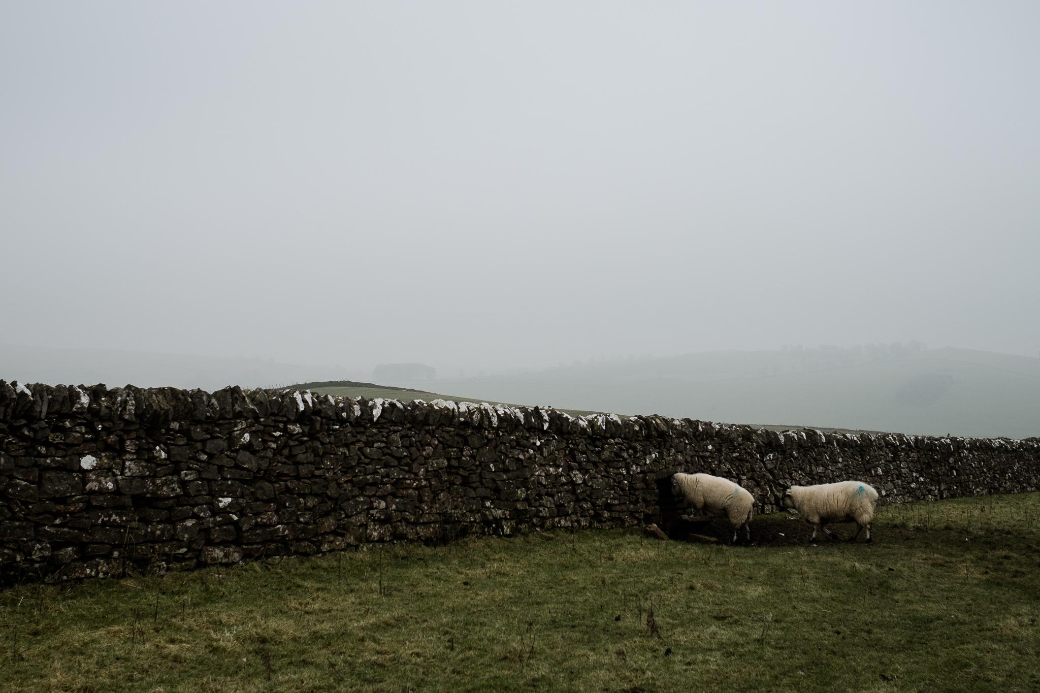 Get Some Fresh Air Photowalk Dovedale Fog Mist Cold Winter River Dove Ilam Sheep Landscape-40.jpg