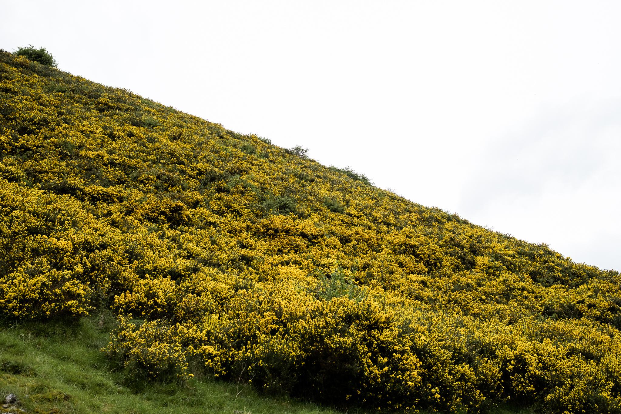 05.19.2017 The Photowalk Network Get Some Fresh Air Photowalk at Hartington and Biggin, Staffordshire Peak District National Trust-19.jpg