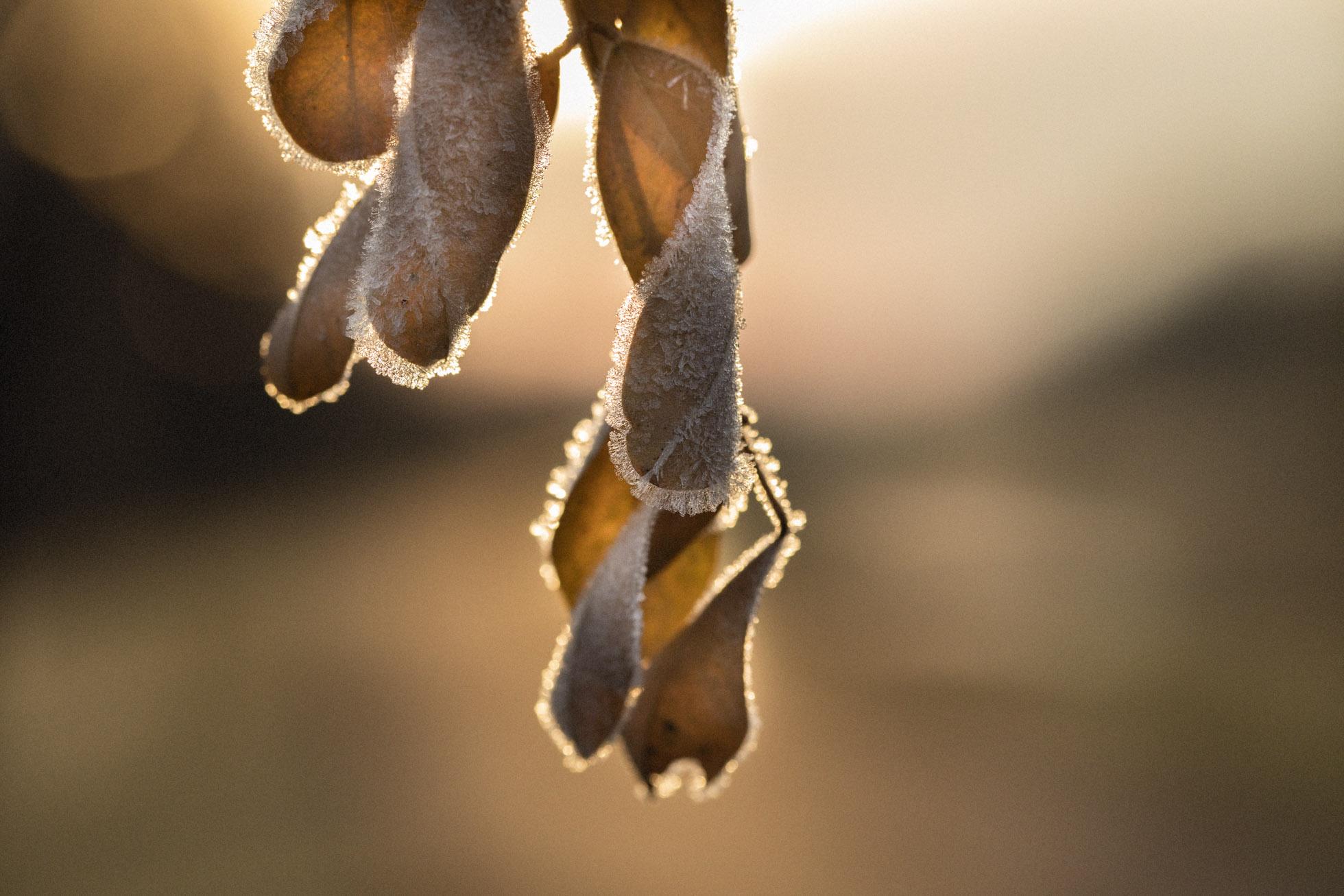 ClickPro10.jpg