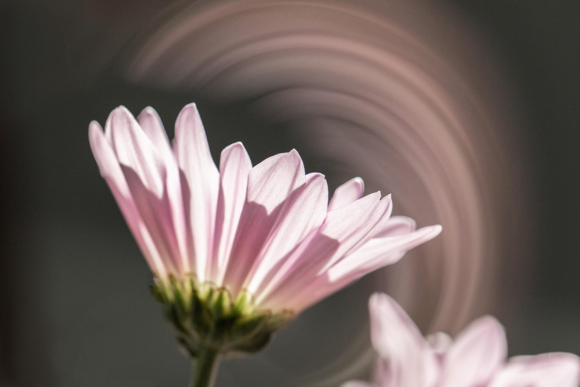 ClickPro23.jpg