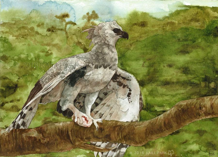 harpy-eagle-watermark.jpg