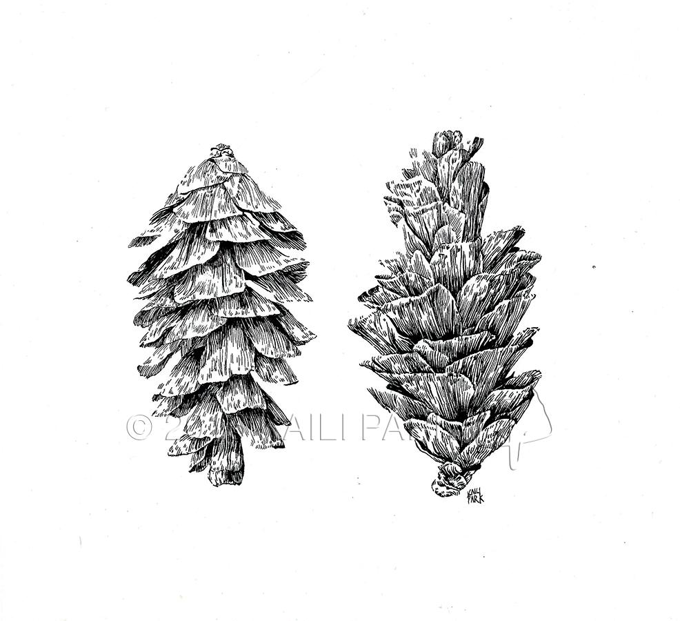 pinecones watermark.png