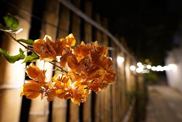 | 111 | d e l i c a t e -  #flower_daily #travel #toneception #bokeh #bokehphotography #bokeh_obsessed #bokeh_kings  #earthpix #wonderful_places #mylpguide #sonya7iii #bealpha  #travelphotography #iamtb