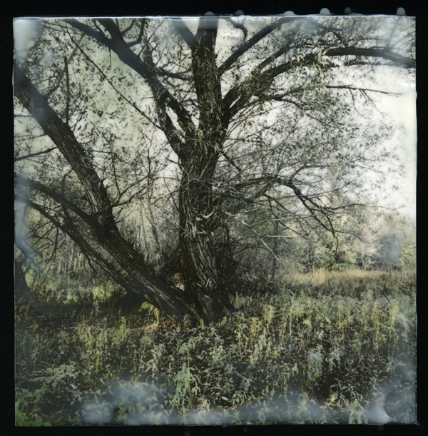 "Old Willow No. 1       reclaimed negative from polaroid, encaustic on wood 6"" x 6"""