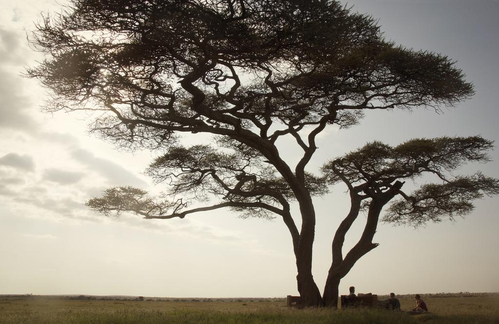 6.Nduara Loliondo-Here & Away.jpg