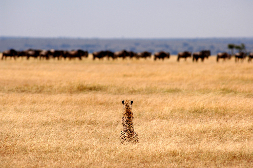 3.Serengeti Safari Camp-Here & Away.jpg