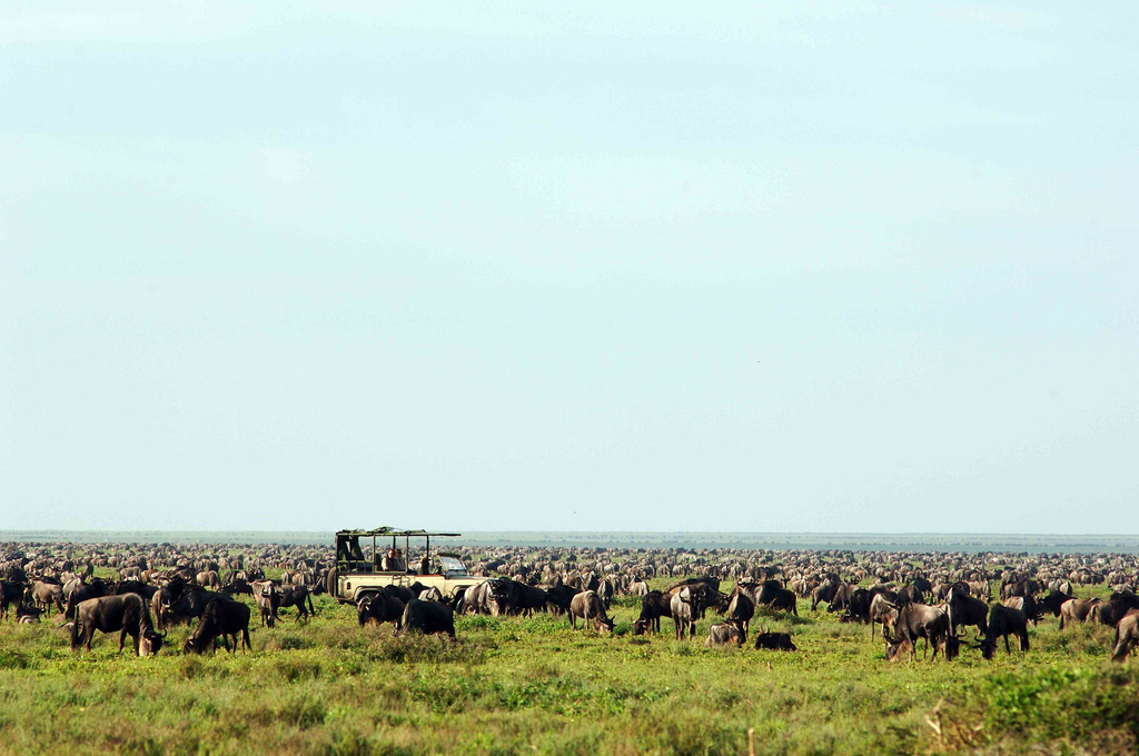 6.Serengeti Safari Camp-Here & Away.jpg
