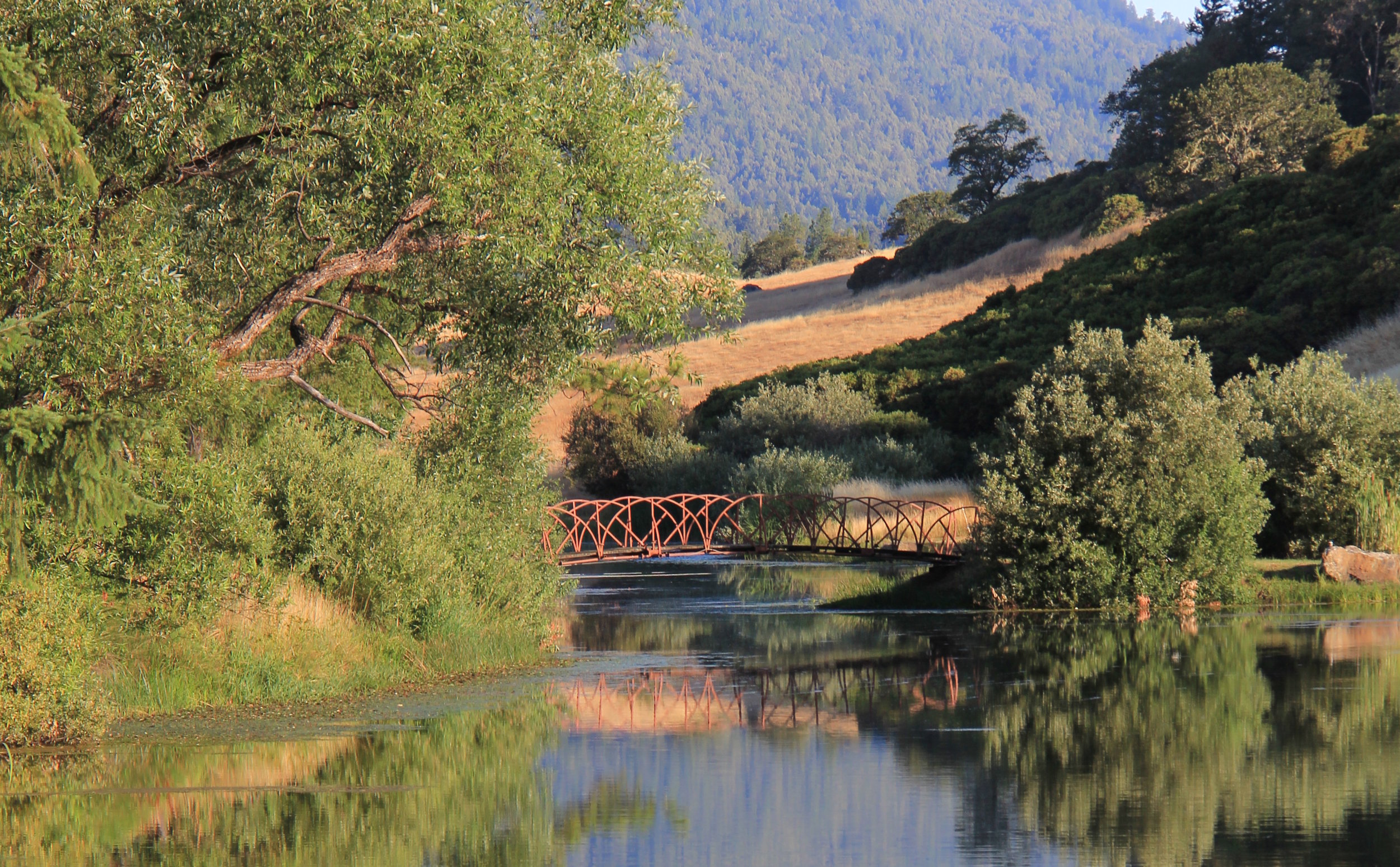 Stroll across the bridge to Big Pond's island