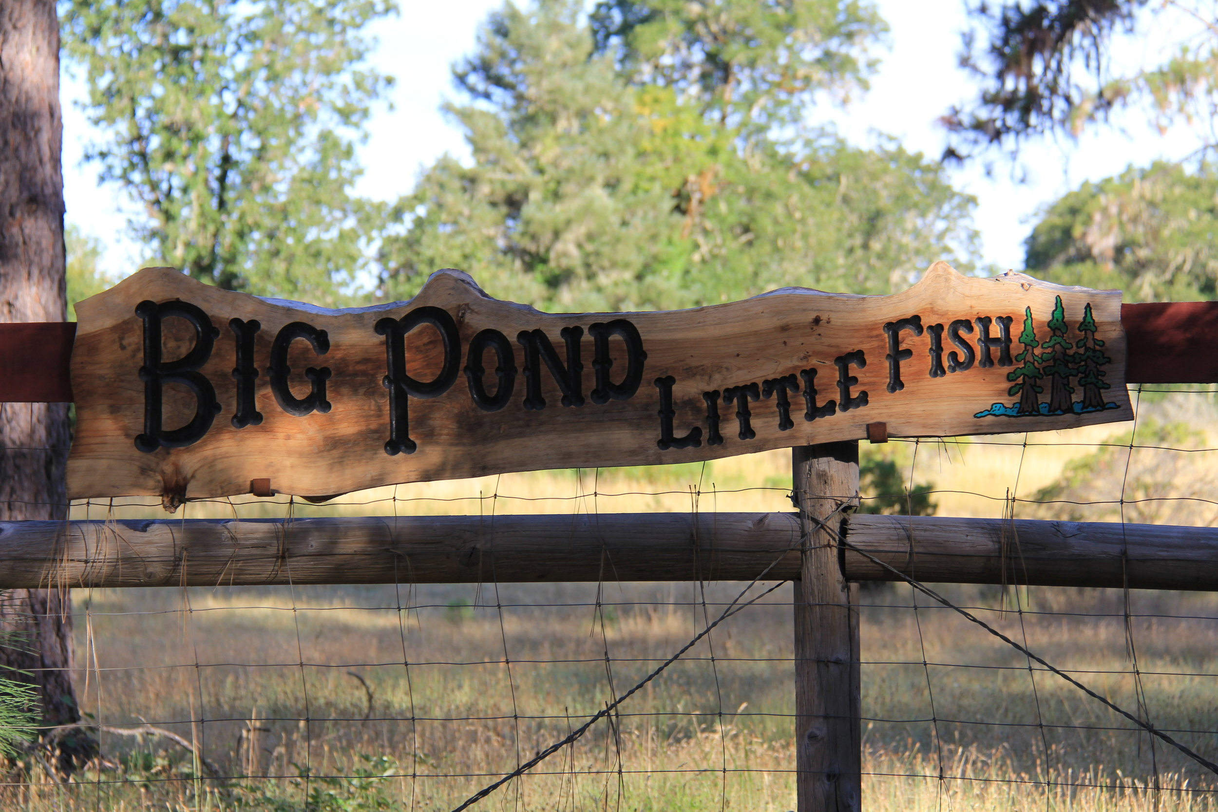 Welcome to Big Pond Little Fish!